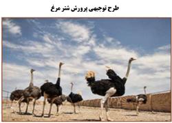 طرح توجیهی پرورش شتر مرغ