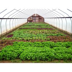 طرح توجیهی تولید محصولات خارج از فصل در گلخانه (صیفی جات گلخانه ای) به ظرفیت 1500 متر مربع
