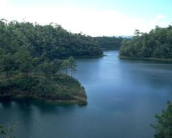 جنگلهای مناطق استوایی (حاره ای)